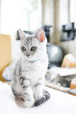 Pretty kitten Stock Image