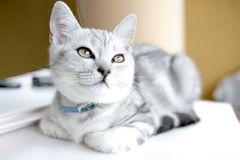 Pretty kitten Stock Photos