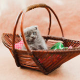 Pretty kitten in the basket Stock Images