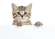 Pretty kitten peeking out of a blank sign Royalty Free Stock Photo