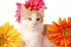 Pretty kitty Royalty Free Stock Photography