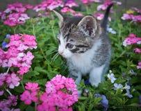 Free Pretty Kitty Royalty Free Stock Photo - 54908305