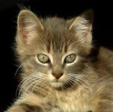 Pretty Kitty Royalty Free Stock Photography