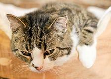 Pretty Kitty Royalty Free Stock Image