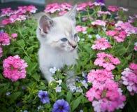 Pretty Kitty Stock Photos