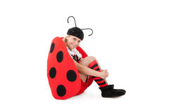 Pretty ladybird Stock Images