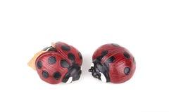 Pretty ladybugs Royalty Free Stock Photo