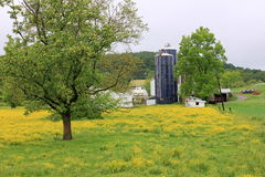 Pretty landscape of buttercups and farms Royalty Free Stock Photos