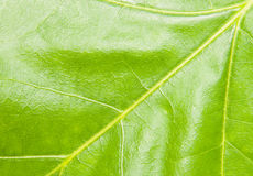 Pretty leaf Stock Images