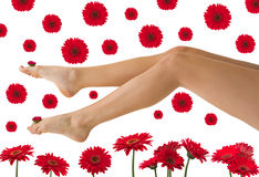 Pretty Legs Royalty Free Stock Photography