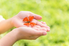 Pretty little butterfly in hands of girl Royalty Free Stock Photography