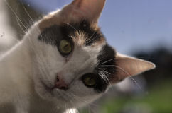 Pretty little cat Stock Photo