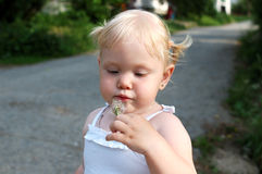 Pretty little girl blow on dandelion flower. Stock Photography