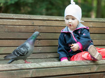 Pretty little girl feeding a pigeon Stock Photos