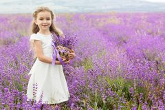 Pretty little girl in lavender field with basket Royalty Free Stock Photos