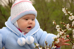Pretty little girl play with cherry blossoms. Pretty little girl with blue jacket play with cherry blossoms stock photo