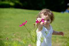 A pretty little girl playing with flowers Royalty Free Stock Images