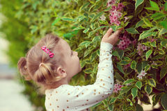Pretty little girl smell a flower Stock Photography