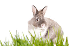 Pretty Easter Bunny on a spring meadow Royalty Free Stock Photo