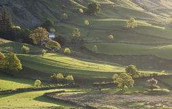 Pretty Little Langdale Trees Stock Images