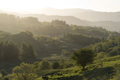 Pretty Little Langdale Trees Stock Photo