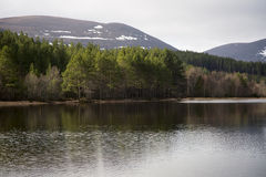 Pretty Loch Morlich Stock Photo