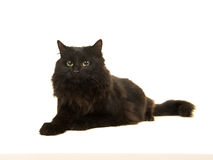 Pretty long haired black cat lying down facing away. Isolated on a white background Stock Photo