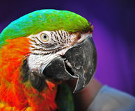 Pretty Macaw Stock Photos