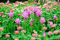 Pretty manicured flower garden Royalty Free Stock Image