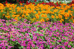 Pretty manicured flower garden Royalty Free Stock Images