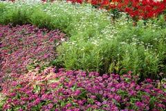 Pretty manicured flower garden Stock Image
