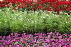 Pretty manicured flower garden Stock Photography