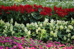 Pretty manicured flower garden Stock Photos