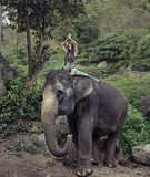 Pretty model riding on the elephant. Pretty model riding on the freindly elephant Royalty Free Stock Images