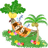 Pretty Monkeys -Taking a nap on the hammock- Stock Images