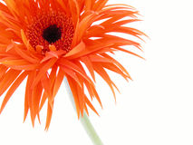 Pretty in orange royalty free stock images