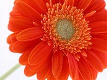 Pretty in orange royalty free stock image