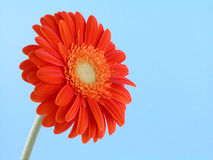 Pretty in orange royalty free stock photography