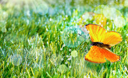 Orange butterfly on green grass Royalty Free Stock Photography