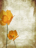 Pretty, orange, poppies grungy background Royalty Free Stock Images