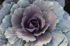 Pretty ornamental plant Stock Photography