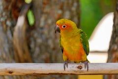 The pretty parrot Stock Photos