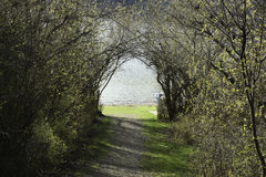 Pretty Path. Go down the path, through the trees and there you will be Stock Photography