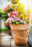 Pretty patio or balcony pot with container flowers: roses and verbena in Sunlight, container planting and gardening concept. Royalty Free Stock Photos