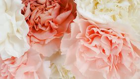 Pretty peony petal flowers background. Wallpaper stock images