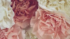 Pretty peony petal flowers background. Wallpaper royalty free stock photos
