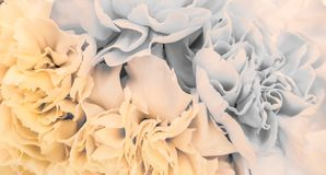 Pretty peony petal flowers background. Wallpaper royalty free stock images