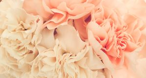 Pretty peony petal flowers background. Wallpaper stock image