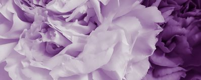 Pretty peony petal flowers background. Wallpaper royalty free stock photography