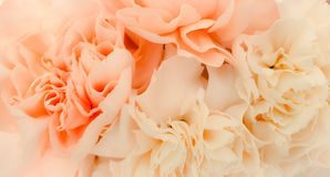 Pretty peony petal flowers background. Wallpaper stock photo